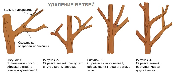 Как сделать обрезка деревьев