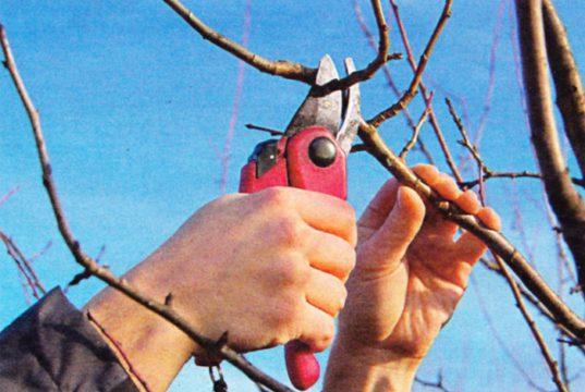 Можно ли обрезать деревья