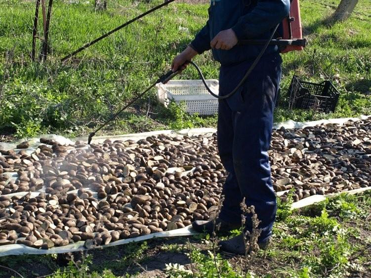 Предпосадочная обработка картофеляПредпосадочная обработка картофеля