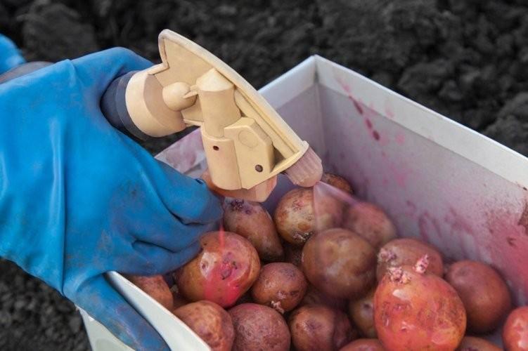 Предпосадочная обработка картофеля