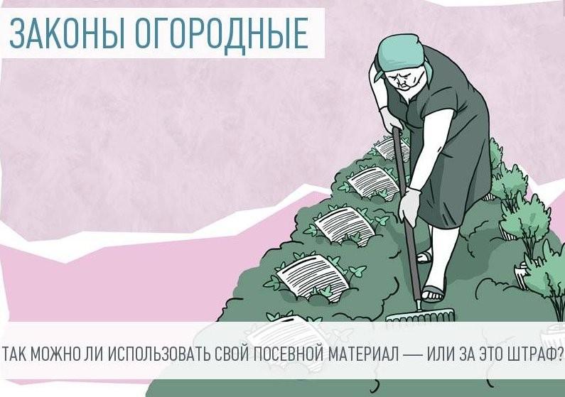 Правовые аспекты посадки картофеля в РФ