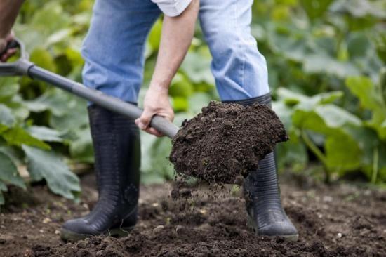 Подготовка грунта под высев зверобоя
