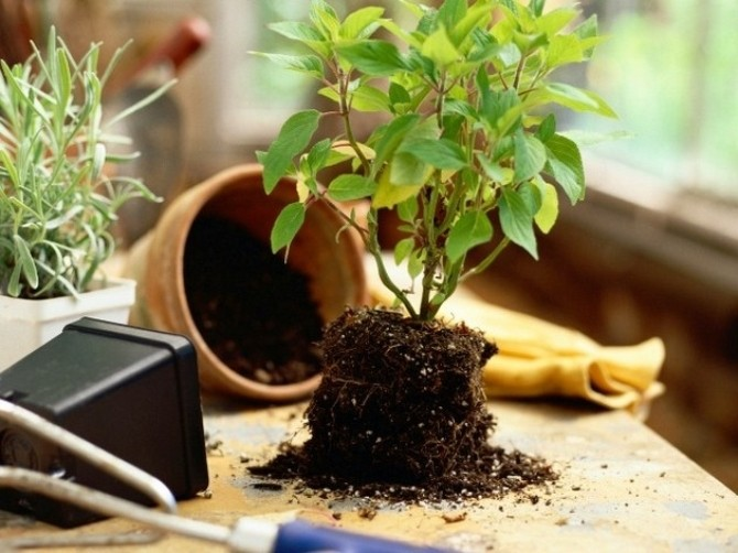 Грунт для комнатных растений