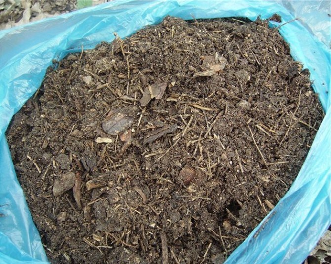Грунт для комнатных растений хвойная земля