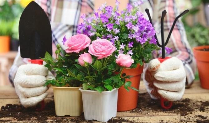 как ухаживать за комнатными растениями, какой нужен грунт