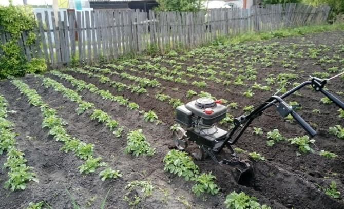 Окучивание картофеля мотоблоком