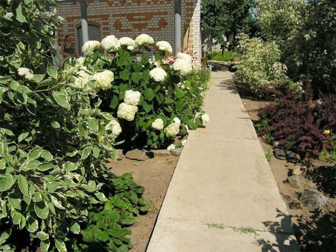 Монолитная бетонная садовая дорожка