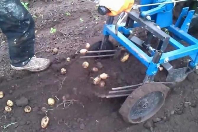 Уборка картофеля мотоблоком